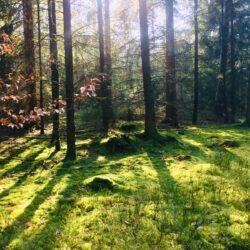 Shinrin Yoku, Baden in der Atmosphäre des Waldes